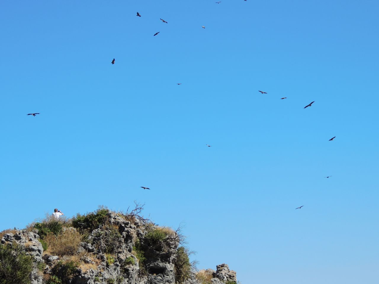 just a few of the Griffon Vultures circling over the town