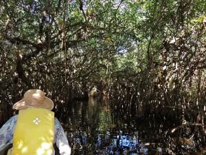 Paddling through the mangroves