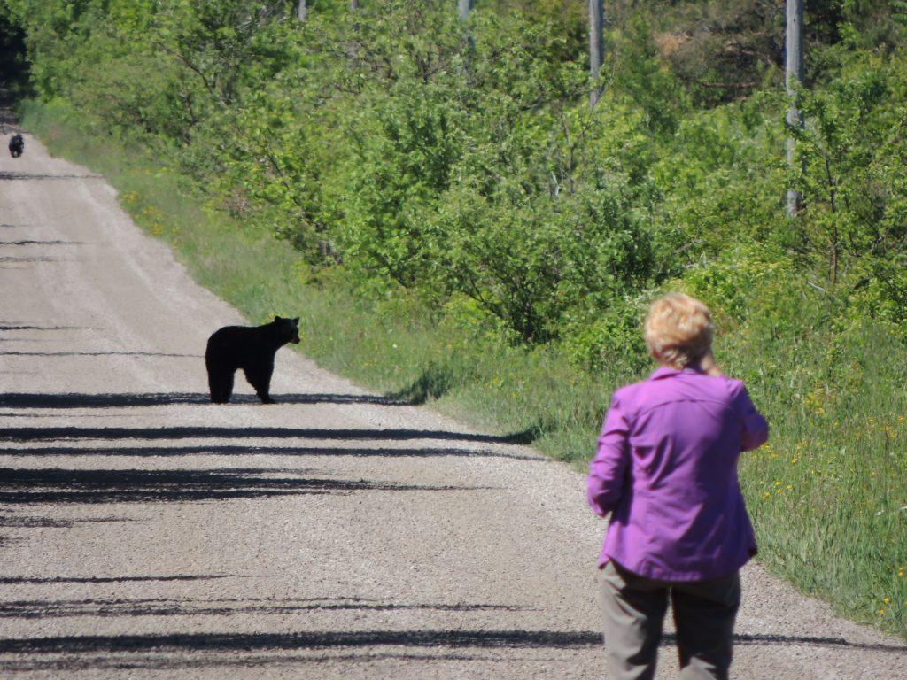Rita and Black Bear cubs
