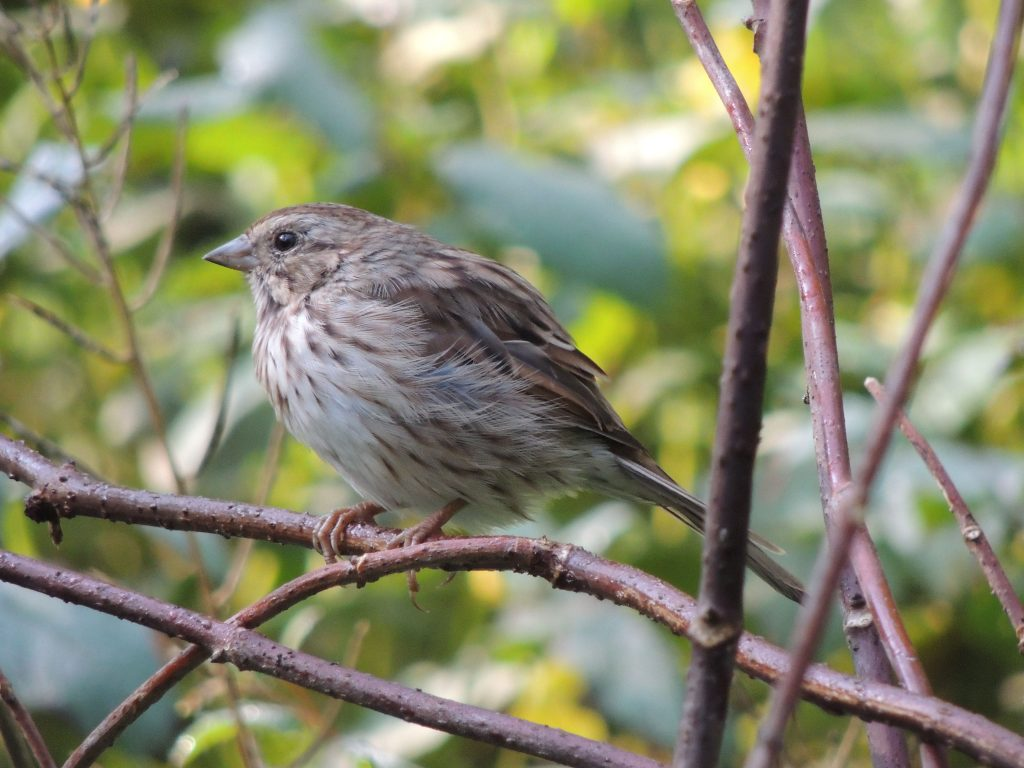 my bird of the day ontario birds ontario birding and my best